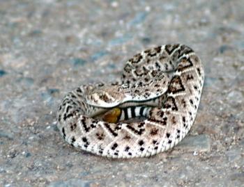 Snake_three