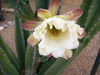 Flowers_003_1