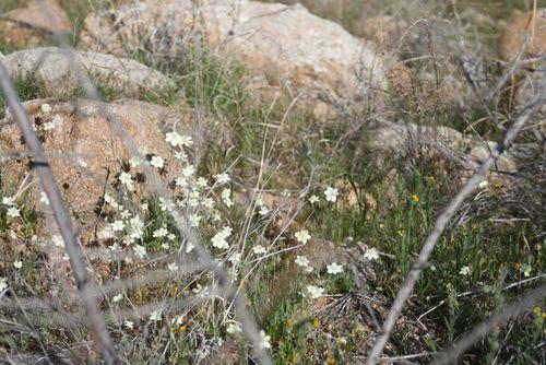 Catalina State Park, 3-2012 037