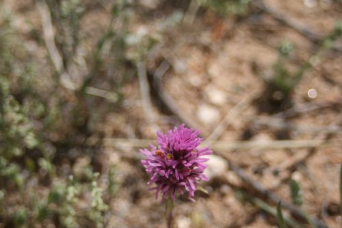 Catalina State Park, 3-2012 039