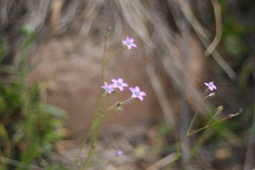 Catalina State Park, 3-2012 076