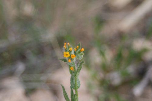 Catalina State Park, 3-2012 077