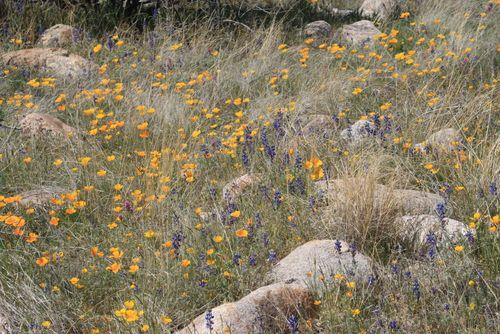Catalina State Park, 3-2012 166